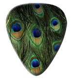 12 Peacock Feather Guitar Picks